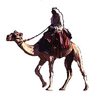 Bedouin man riding a camel